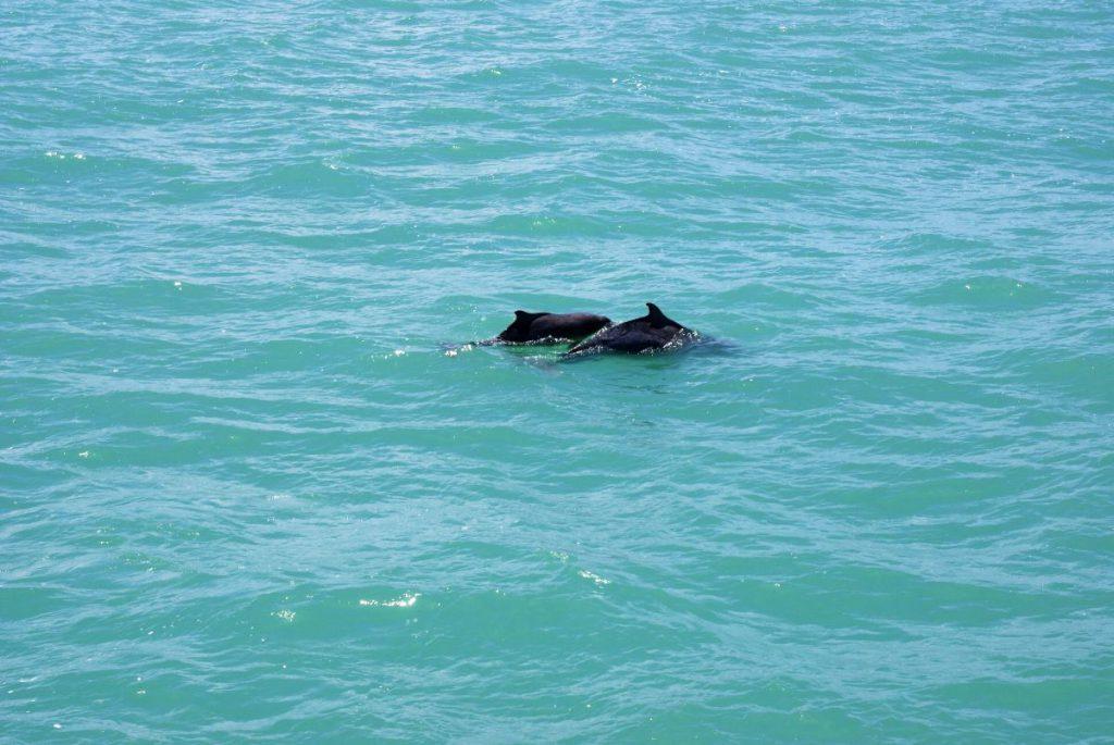 Delphine Südafrika