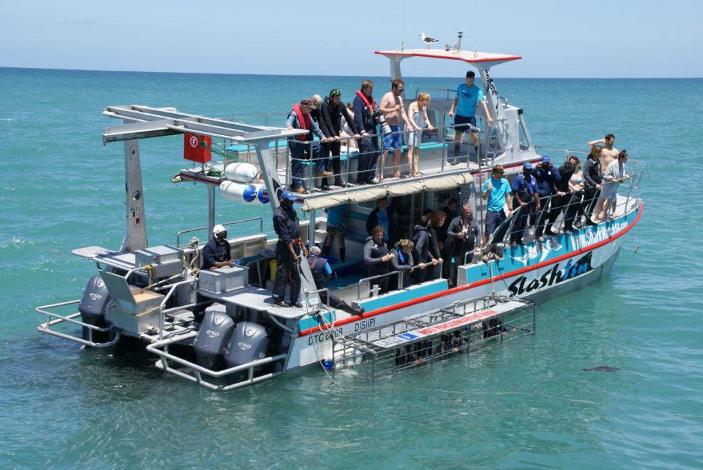 Shark Diving Südafrika