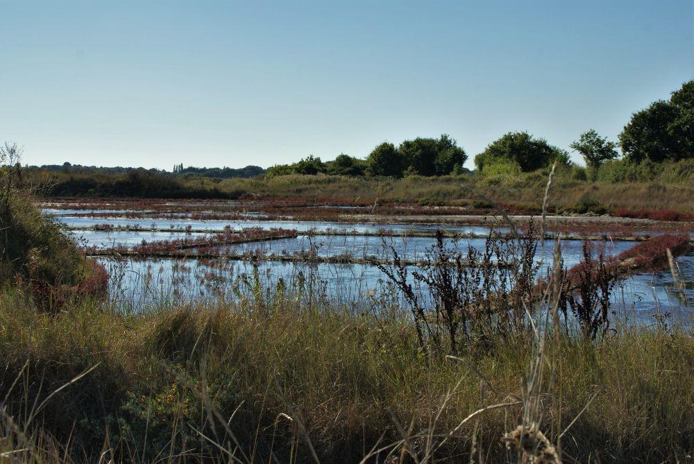 Eine Sumpflandschaft unweit des Atlantiks. Von hier kommt eines der teuersten Salze der Welt - das Fleur de Sel aus Guérande.
